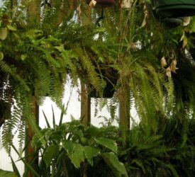 Ferns-and-houseplants