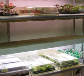 Seeds-and-propagation-system