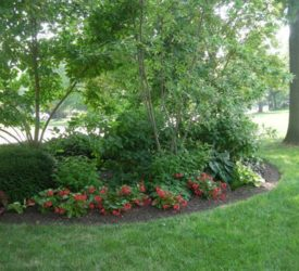 Shade-Garden-Berm-with-Begonias-Big-Red