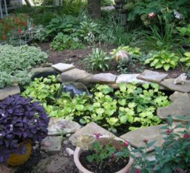 Water-pond