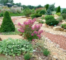 Rock Garden.  Lambs' Ear; dwarf Alberta Spruce and Crepe Myrtle.